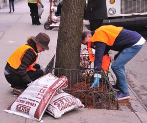 Celebrate Earth Day in Murray Hill! Mulching Event on Third Avenue!