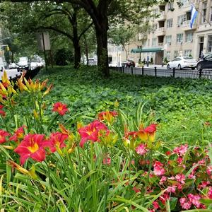 With your help the Murray Hill malls on Park Avenue are a green oasis!